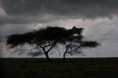 rain storm gathers