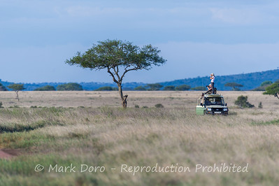 Game viewing, Serengeti, Tanzania
