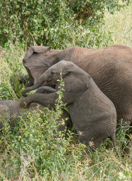 Elephant Climbing