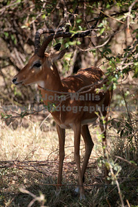 antelope 1-fRN
