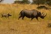 Rinoceronte y su cría (Serengeti)