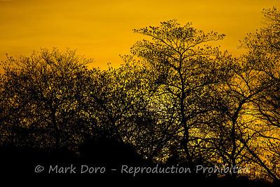 Sunset through the trees, Selous, Tanzania