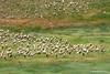 Grupo de cigüeña de pico amarillo