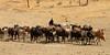 Guerrero menor masái pastoreando