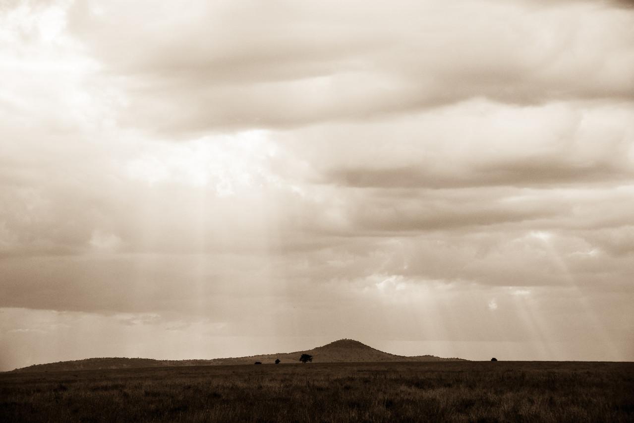 Serengeti Sun Rays
