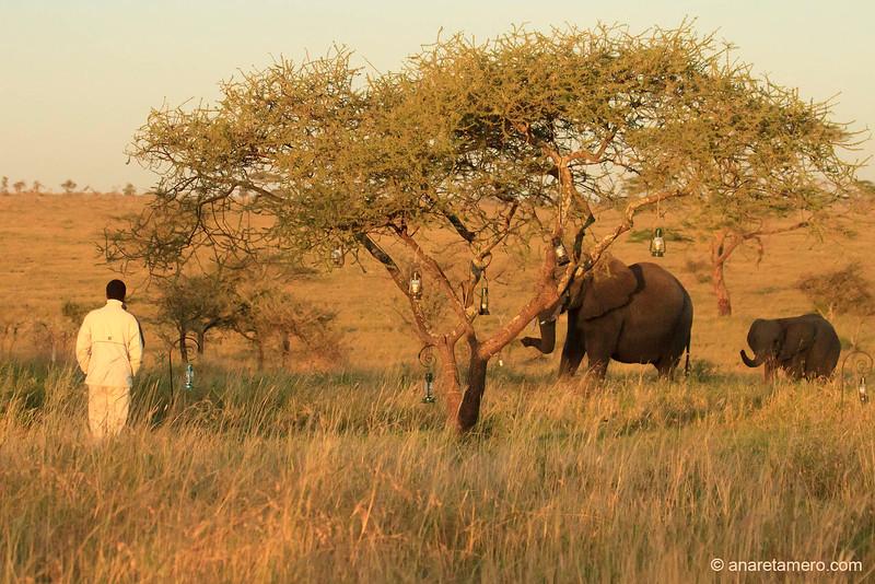 Despertar desde el tented camp en Serengeti