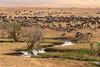 Ñus en el Cráter de Ngorongoro