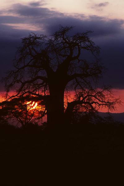 Tarangire in Tanzania