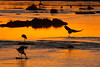 Río Mara al amanecer con carroñeras sobre los cadáveres de ñus