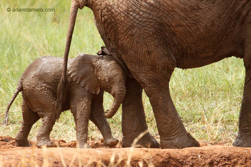 Protegido tras su madre