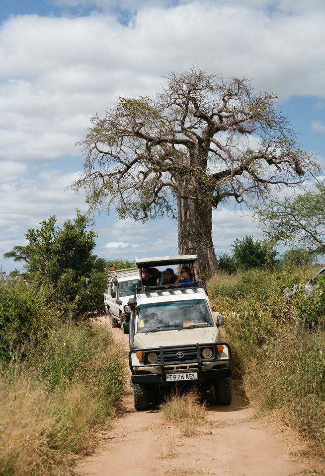 Tarangire Game Safari