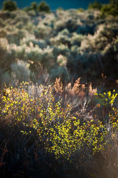 039Plants_High desert_Taos  NM_May 2011_015 copy