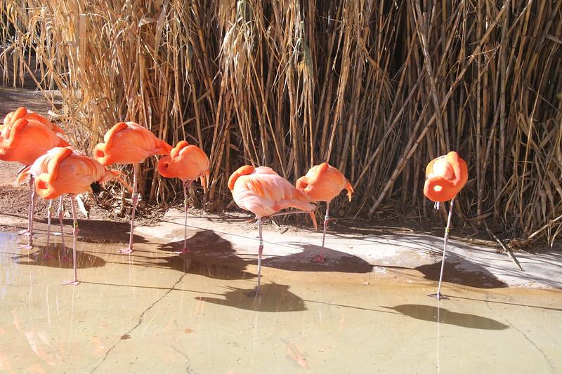 Zoo in Albuquerque New Mexico