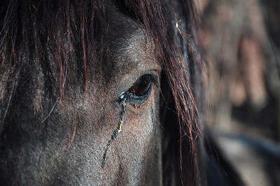 A two minute walk outside our Casa brought us to a ranch with many beautiful horses to feed, pet and photograph. This one seems to be crying since it was taken on our last morning before departure.