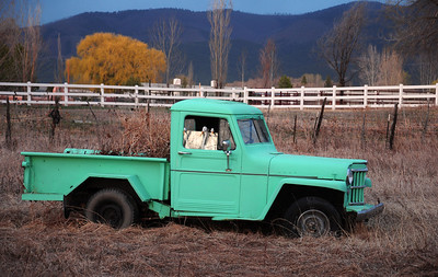 Old truck parked in a field in Taos. Notice the duckies inside.