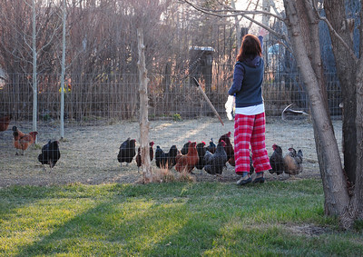 Jeannette feeds the chickens in the hen house outside our casa.
