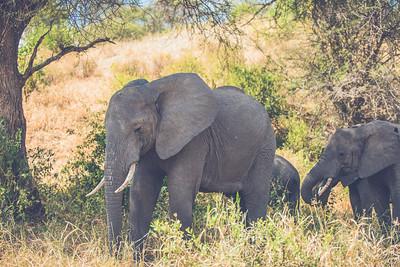 Tanzania-North-1