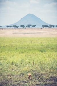 Tanzania-North-56