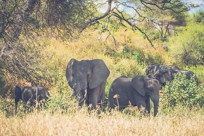 Tanzania-North-117