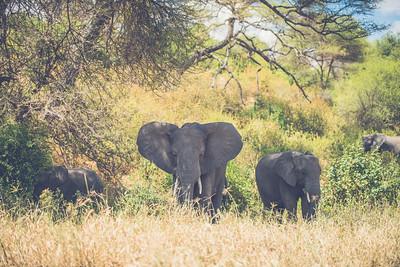 Tanzania-North-45