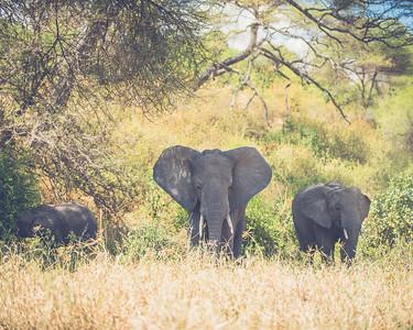 Tanzania-North-41