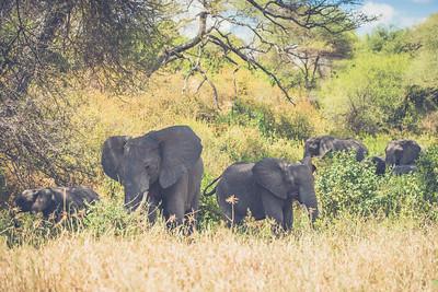 Tanzania-North-103