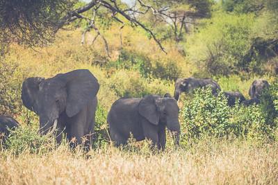 Tanzania-North-82