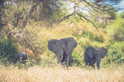 Tanzania-North-33