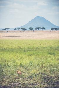 Tanzania-North-63