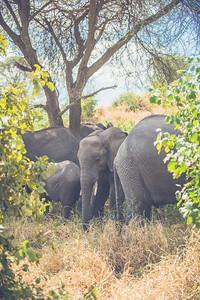 Tanzania-North-101