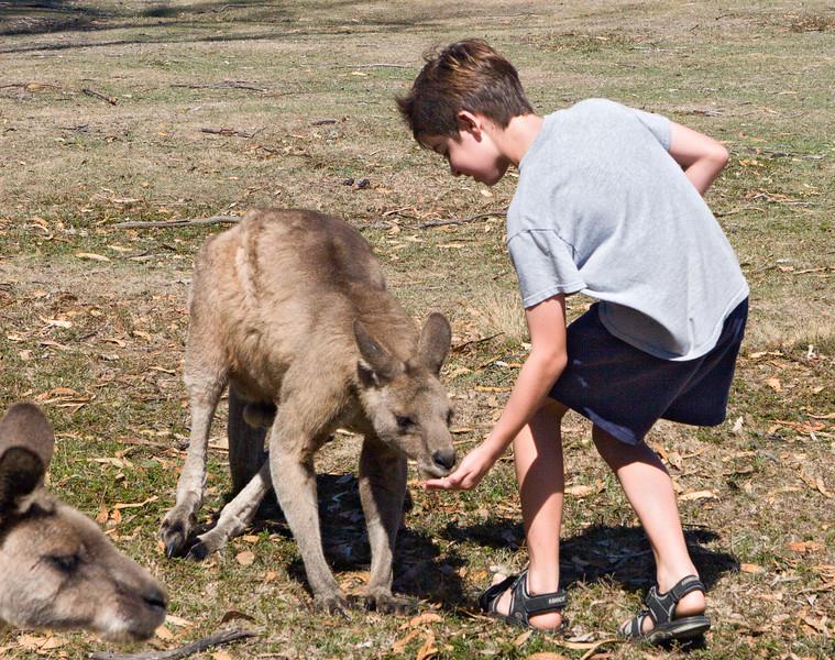 Noah feeding Kangaroo, tentatively.