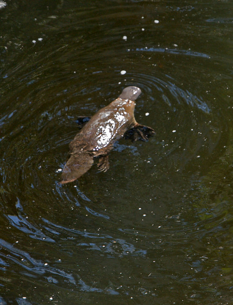Note the webbed feet.