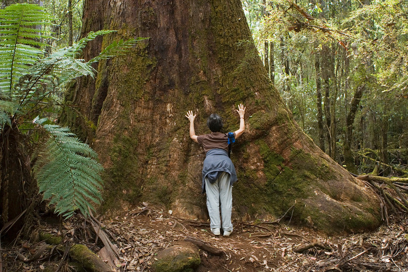 A tree hugger paying tall tree homage.