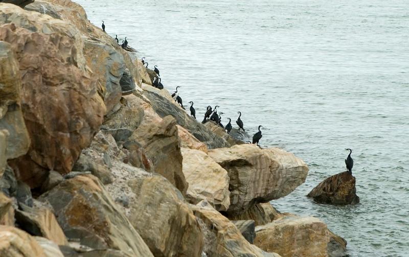 Cormorants on nearby breakwater.