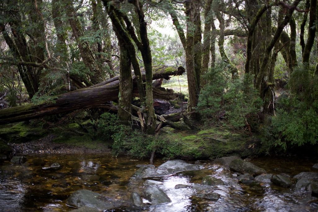 Rain forest creek
