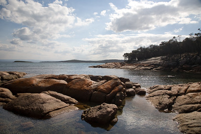 Freycinet Forest