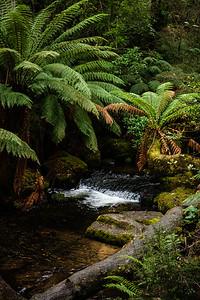 20190629_Tasmania-8016