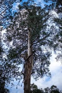 20190629_Tasmania-8044