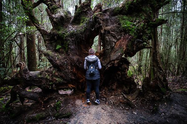 20190629_Tasmania-8031