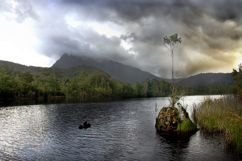 A view of Mount Black from the banks of the Pieman River, near Tullah, Tasmania.