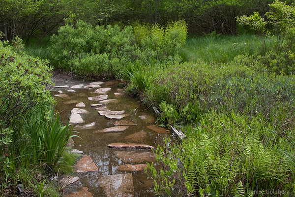 Watery path in the Wild Gardens of Acadia