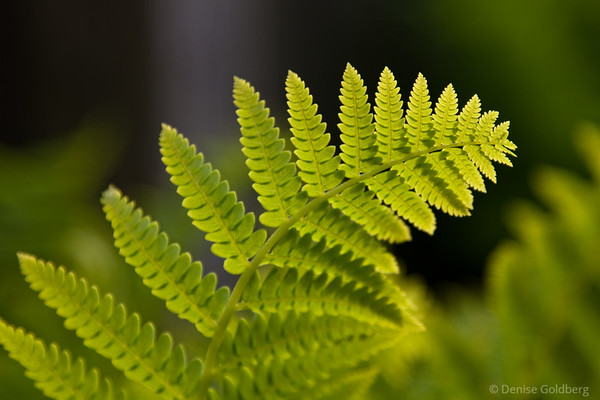 ferns, bending