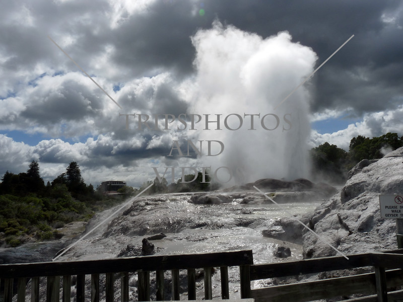 Prince of Wales Feathers and Pohutu geysers in the Whakarewarewa Thermal Valley in Rotorua, New Zealand.