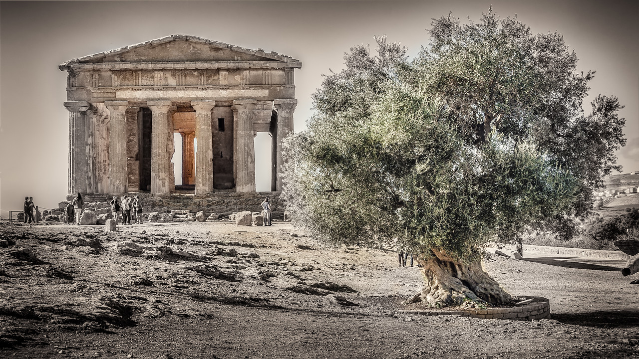 The Temple of Concord with its millenary olive tree in Agrigento SIcily.