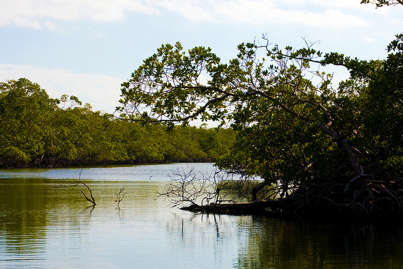 we took a little tour of a mangrove swamp after our dolphin sightings