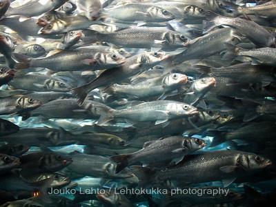Sardines - Loro Park