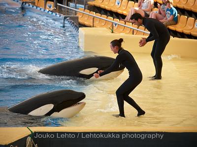 The Orca Show - Loro Park