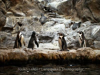 Penguins - Loro Park