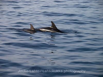 Delfiinit - Delphins. Valasretki - Whale trip