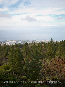 Teide National Park nr 130, with Canary pines